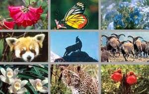 440-sikkim-flora-fauna