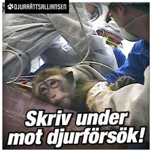 stoppa djurförsök