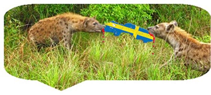 hyenorslåssommaten4