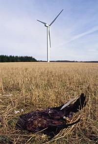 kraftverk-död örn