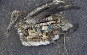 fågel-plast-i-magen