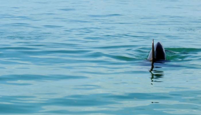 delfin-2