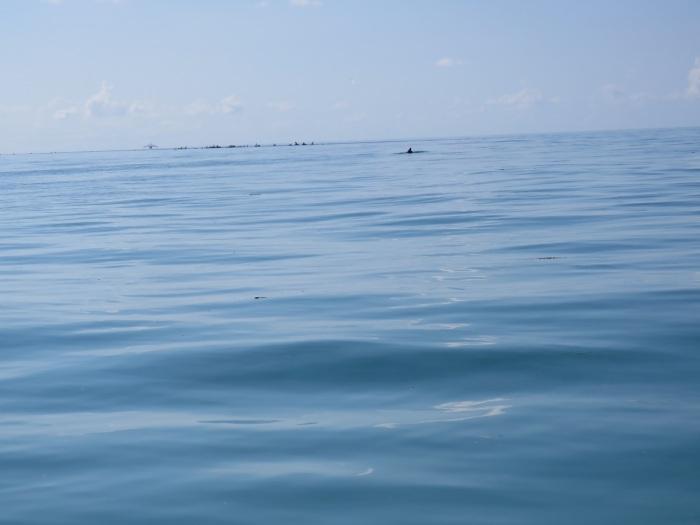 delfin-