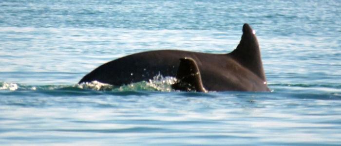delfiner-4
