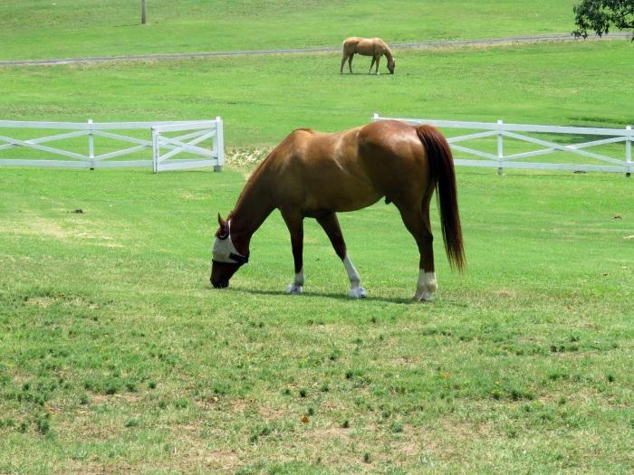 elvis-hästar