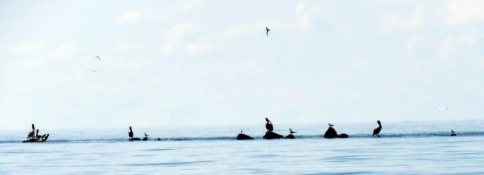 rev-fåglar-2