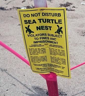 skylt-sköldpaddor